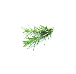 ROSEMARY cleanser: Blue Beautifly